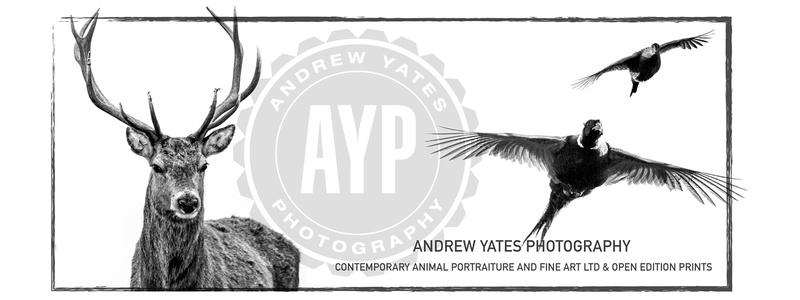 AYP Poster 2